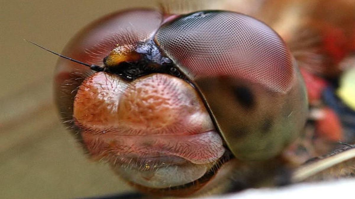 Макрофотосъёмка - насекомые чудовища