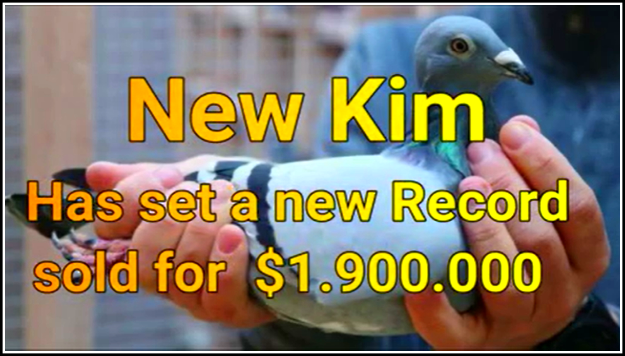 почтовый голубь Нью Ким стоимостью 1.9 млн. долларов