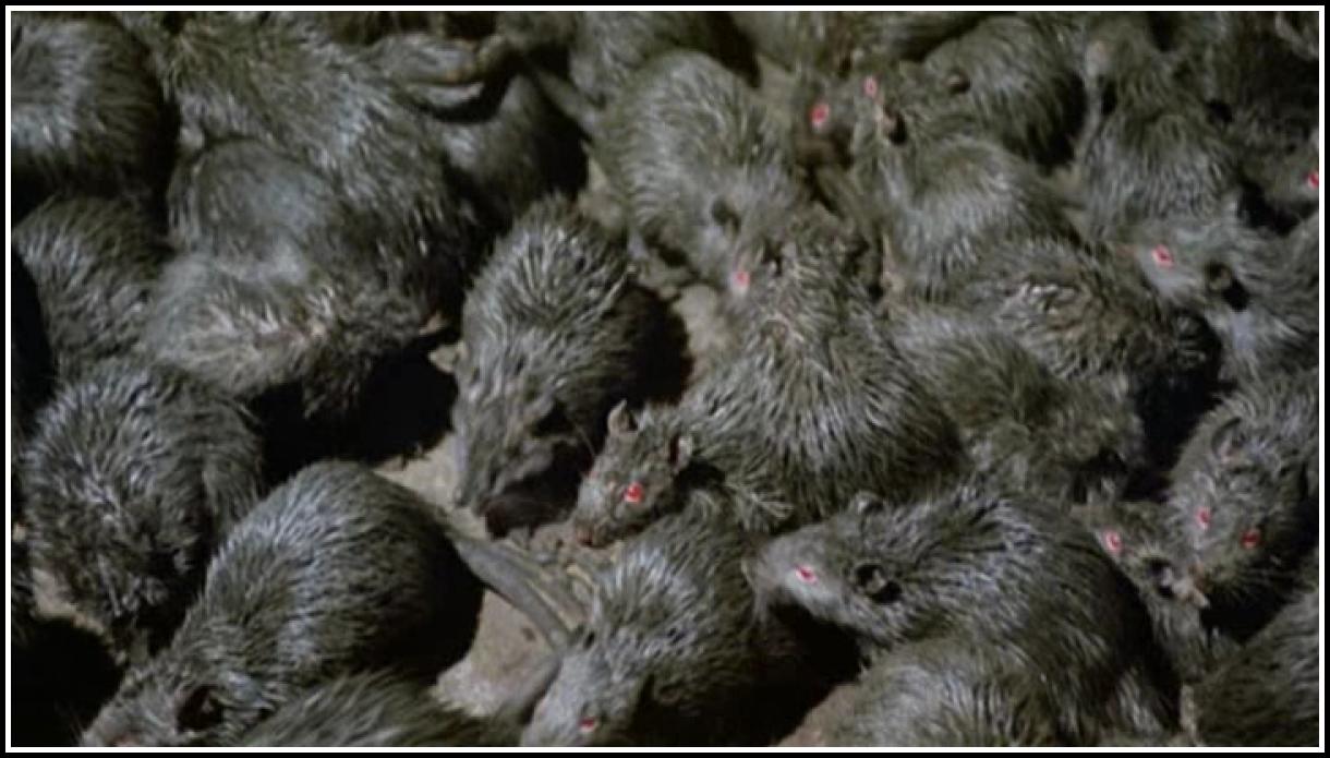 Чума мышей: новая пандемия