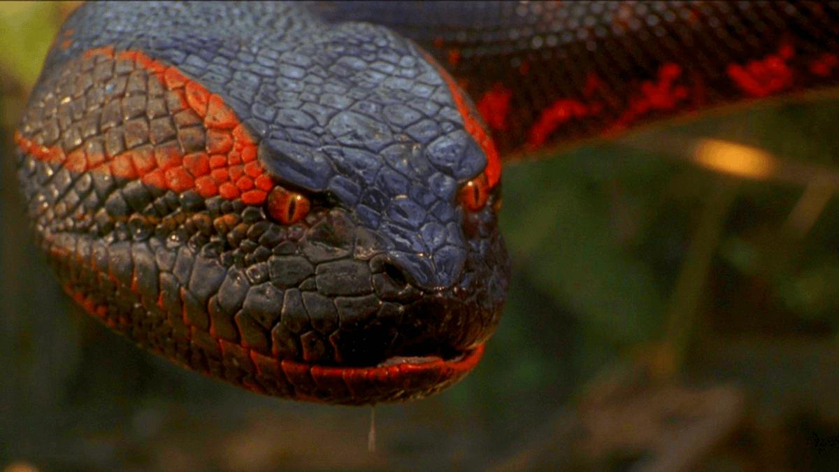 10 самых ядовитых змей: поледствия укуса и места обитания